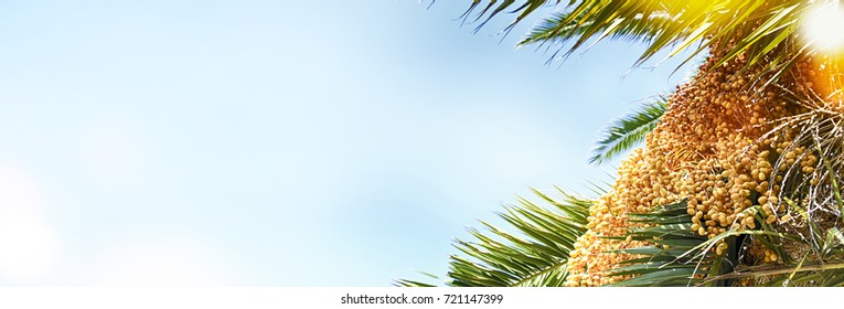 Nature background with palm