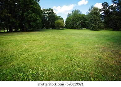 Nature background, park with meadow among green lush foliage and trees
