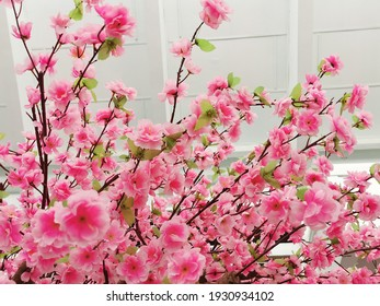 Nature background and pink flowers