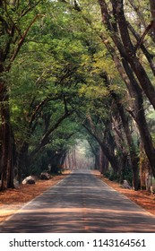 Nature background of route and journey amidst the big tree and beautiful nature