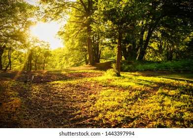 Nature background: a scenic forest of fresh green deciduous trees with a bright sun casting its rays of light through the foliage.