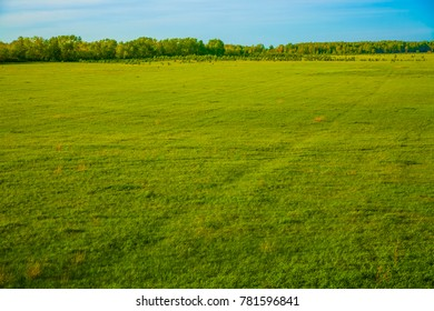 nature background. Spring landscape with green meadow and spring forest