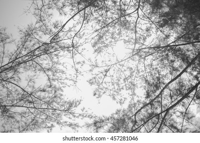 Nature background of tree branches
