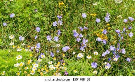 Nature background with various wild field flowers
