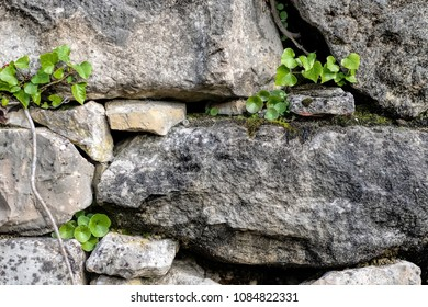 nature background wall covered with plants