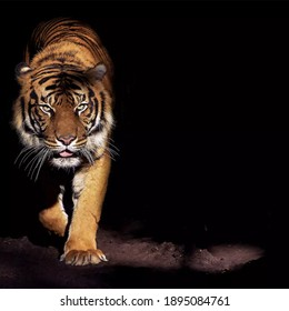 Nature background  wallpaper paper tigers  nature images etc.