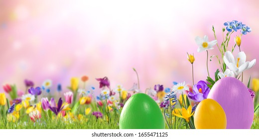 Nature background with wild flowers in green grass on meadow; selective focus. Spring wallpaper for greetings card design