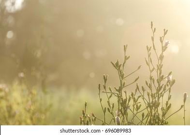 nature background of wild flowers on sunrise light
