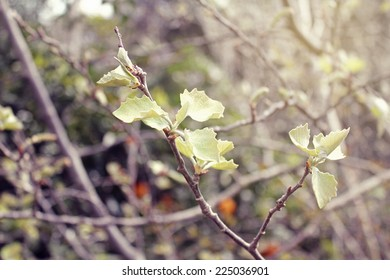 Nature  background of the young spring leaves