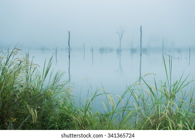 Nature backgrounds with fog.