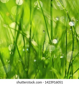 Nature. Beautiful close up photo of nature. Green grass with dew drops. Colorful spring background with morning sun and natural green plants landscape, ecology, fresh wallpaper concept with copy space