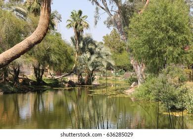 Nature, Beautiful Lake in Tucson, Arizona
