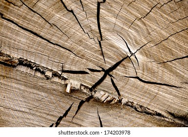 nature, beautiful slice of a large, old tree. a large number of annual rings and cracks