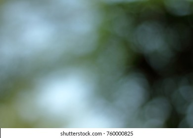nature blurred background