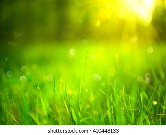 Nature blurred background. Green grass in spring park with sun flares backdrop. Nature summer scene
