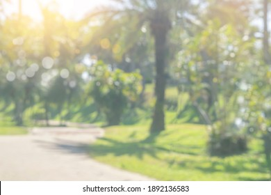 Nature blurred background. Green tree in a park with light bokeh and sunlight. natural trees, lawn and walkway in outdoor garden. Abstract blur nature landscape green environment concept