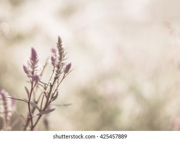 nature blurred background;vintage tone