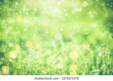 Nature blurred bokeh background. New spring grass on sunny light. Defocus summer day. Springtime concept  with abstract blurred foliage and bright summer sunlight. Toned photo