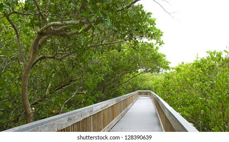 Nature boardwalk through a mangrove forest in Florida