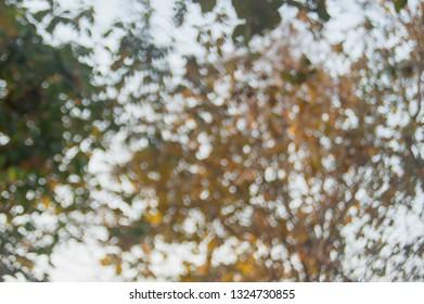 Nature Bokeh Backgrounds