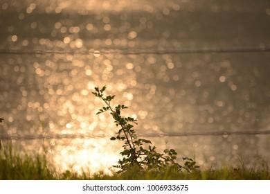 Nature and bokeh heaven