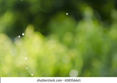 nature bokeh with raindrops backround