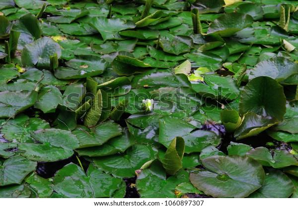 Nature Botany Foliage Green Background