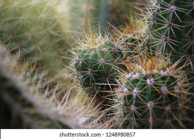 Nature Cacti Macro