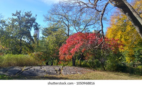 Nature in Central Park - New York