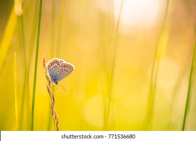 Nature closeup background. Beautiful summer spring meadow and butterfly in natural sunset scene. Calm and inspire nature concept