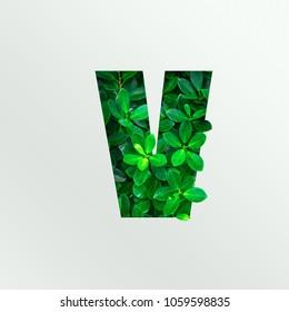 Nature concept alphabet of green leaves in alphabet letter V