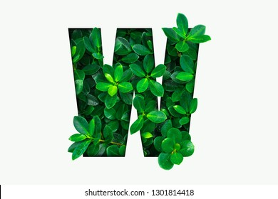 Nature concept alphabet of green leaves in alphabet letter W