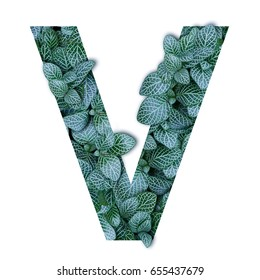 Nature concept alphabet of green leaves in alphabet letter V shapes isolated