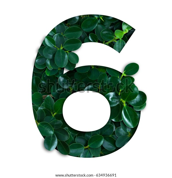 Nature concept alphabet of green leaves in number six shape