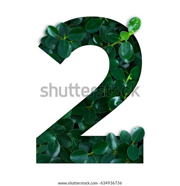 Nature concept alphabet of green leaves in number two shape