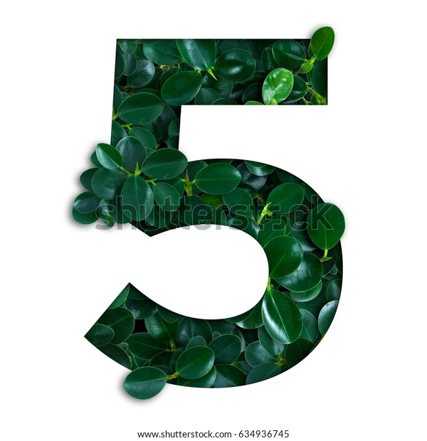 Nature concept alphabet of green leaves in number five shape