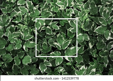 Nature concept pattern - green leaves background with white paper frame. Flat lay