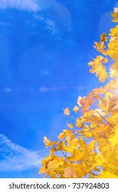 Nature Concepts. Autumn Yellow- Red Maple Leaves Placed as a Frame Against Blue Sky Background. Fall Themes.Vertical Image Composition