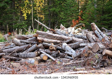Nature conservation, abandoned felled trees in a wild forest, dump