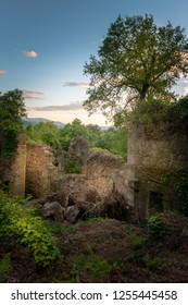 Nature covered ruins in spring