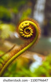 nature details golden section of fern and Fibonacci series