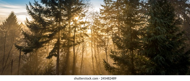 Nature of dreams, sun rays through the fog in an idyllic natural forest landscape. Exploring the mystical wilderness of British Columbia.