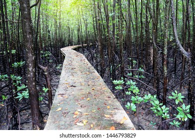 Nature environment & ecology of Mystic journey Pathway at beautiful mangrove forest in tropical summer morning sunlight & sun ray, ecotourism natural path way, copy space