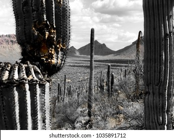 Nature - Explore Arizona
