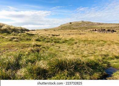 Nature of the Falkland Island, grass and sky