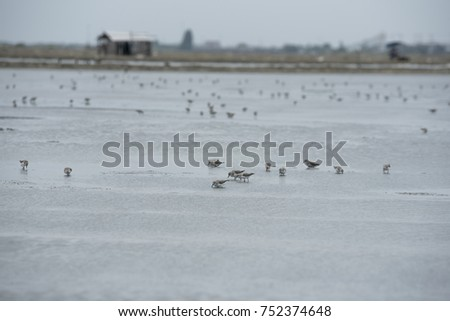 Nature Flock Outdoor Birds Ecology Concept Stock Photo Edit Now