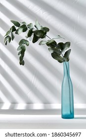 nature, flora and herbal concept - eucalyptus populus branch in blue glass vase on white table - Shutterstock ID 1860345697