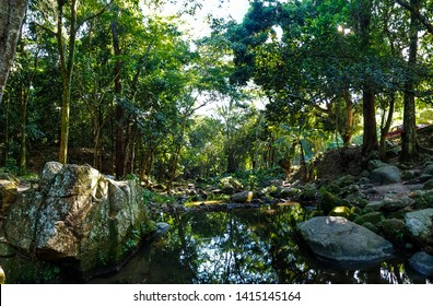 Nature florest tree wood stones natural green environment
