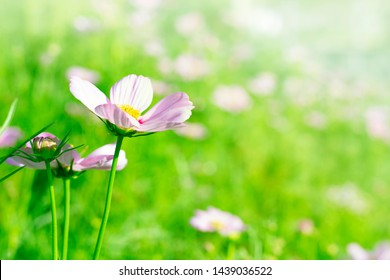 Nature flower background. Flower blossom on the morning.