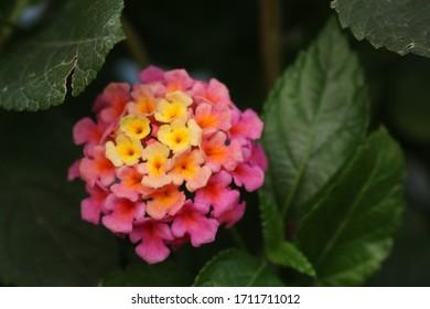 nature flower blossom, beautiful garden